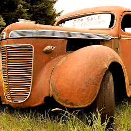 Regal Relic by Barbara Brock - Transportation Automobiles ( old car, car in the field, antique car, orange automobile )