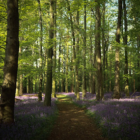 The Path by VAM Photography - Nature Up Close Trees & Bushes ( forest, scan, travel, flowers, landscape,  )