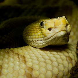 Step Back Slowly...Very Slowly by Rod Schrader - Animals Reptiles