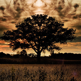 Tree in a Field by Lile Geōrgios - Landscapes Prairies, Meadows & Fields ( field, pumpkin farm, tree, sunset, symmetry, rich colors )