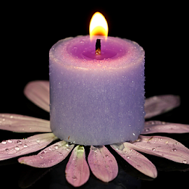 by Dipali S - Artistic Objects Other Objects ( water, candle, purple, fresh, petals, drops, pink, light, tea light )