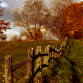 Fenced In by Janet Lyle - Landscapes Prairies, Meadows & Fields ( autumn, foliage, fall )