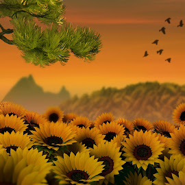 Sunflower Fields by Jamie Keith - Illustration Places
