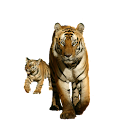 Tiger with Cub Sticker icon