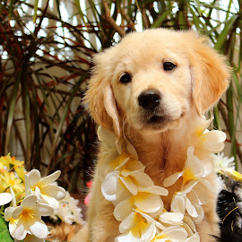 Pixi by Julie Blight - Animals - Dogs Puppies ( puppy, flowers, golden,  )