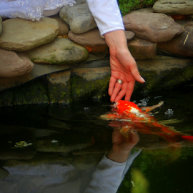 Touched by Jason Weigner - Wedding Bride ( hand, dress, wedding, fish, white, koi, bride, Wedding, Weddings, Marriage,  )