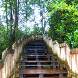 Blackwater Stairs  by Leah Zisserson - Landscapes Forests ( stairs, park, west virginia, falls, woods,  )