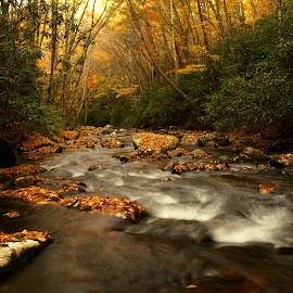 Smokey Mountains Fall by Gabriel Butler - Landscapes Waterscapes