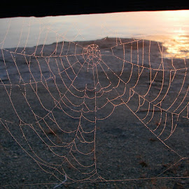 Web with a door by Terry Niec - Nature Up Close Webs ( yellowstone, dawn, lake, web )