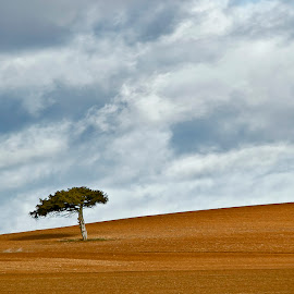 La bella soledad del campo by Silvia Romero - Landscapes Prairies, Meadows & Fields ( campo, arbol )