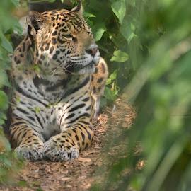 by Darren Peckham - Novices Only Wildlife