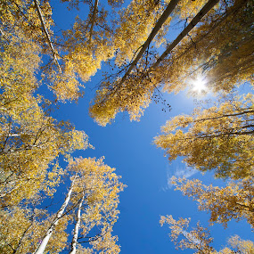 serenity is found by Ruth Jolly - Nature Up Close Trees & Bushes ( nature, autumn, foliage, trees, leaf, leaves, aspen )