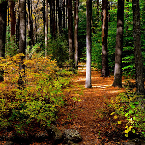 Sleeping Giant Trail by Carl Testo - Landscapes Forests ( autumn, trail, sleeping giant )
