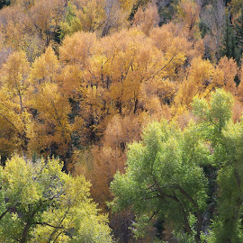 aspen, colorado by Ilona Williams - Novices Only Landscapes