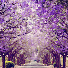 Purple street s.jpg