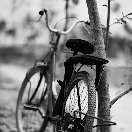 Bicycle by Taufan F Adryan - Transportation Bicycles