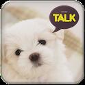 강아지 카카오톡 테마 icon