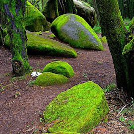 Asterix woods by Luis Palma - Nature Up Close Rock & Stone