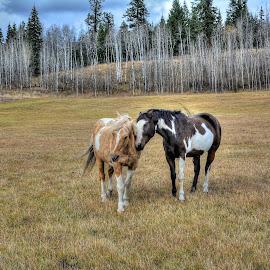 Palomino and Pal by Skye Ryan-Evans - Animals Horses ( palomino, horse-lovers, horse friends, pinto, ranch horses, loving horses, indian paint horse )
