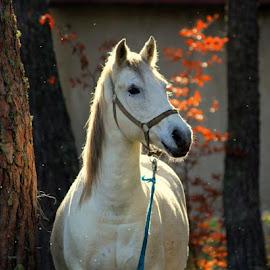 by РАЙНА СИНДЖИРЛИЕВА - Animals Horses ( flower, bouquet )