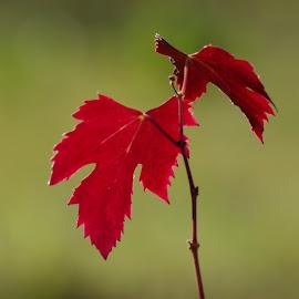 by Agatanghel Alexoaei - Nature Up Close Leaves & Grasses