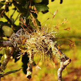 Lichen 2836 by Jim Suter - Nature Up Close Mushrooms & Fungi