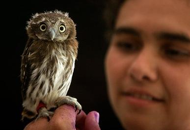 owl-2