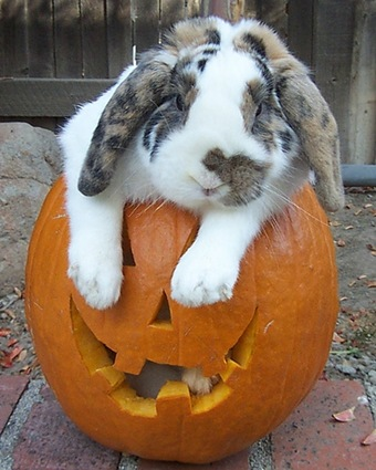 cute rabbit photo 3
