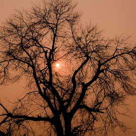 Sun Behind the Tree by Adnan Ali - Nature Up Close Trees & Bushes ( adnan ali, tree, nature, light, sun )