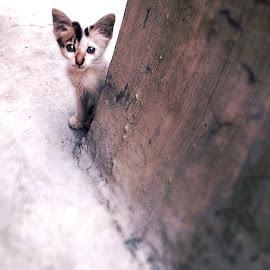 by David Tandayu - Animals - Cats Kittens