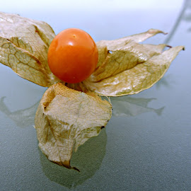 Cape Gooseberry by Tamsin Carlisle - Food & Drink Fruits & Vegetables ( palm, physalis peruviana, berry, orange, reflection, fruit, still life, glass, cape gooseberry )