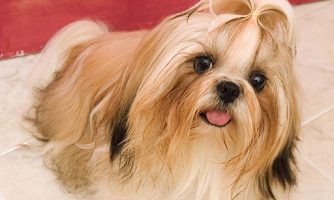 Screenshot of Dogs Wallpapers
