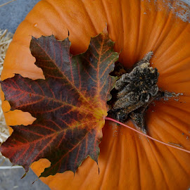 Pumkin Season by Martin Et Johan - Nature Up Close Gardens & Produce ( fall, color, colorful, nature )