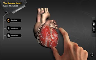 Screenshot of Explore heart in 3D