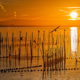 Albufera lake Spain by Jorge Igual - Landscapes Sunsets & Sunrises ( water, bird, sunset, lake, valencia, spain )