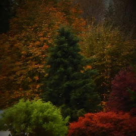 TREES IN FULL COLORS by Lavonne Ripley - Nature Up Close Trees & Bushes