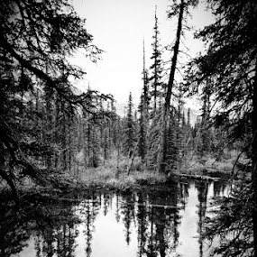 Trees near the River - Glacier National Park by Joe Boyle - Landscapes Waterscapes ( pines, stream, tree, white, trees, pwcbwlandscapes, pine, black, glacier national park, river )