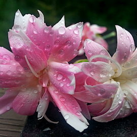 by Dipali S - Instagram & Mobile Android ( water drops, android, nature, flora, two flowers, pink )