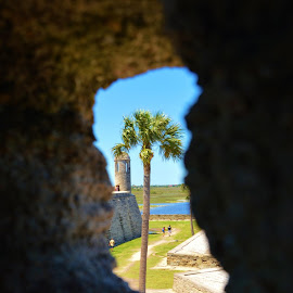 Peek-a-boo Palm by Lisa Montcalm - Buildings & Architecture Statues & Monuments (  )