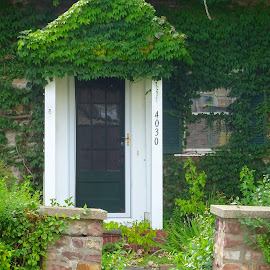 Ivy House by Judy Dean - Buildings & Architecture Homes ( home, house, ivy, vegetation, covered,  )