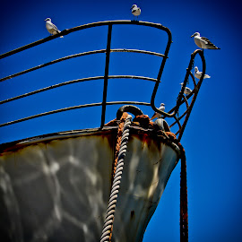 boat docked at hout bay harbour  by Magdalena Wysoczanska - Artistic Objects Other Objects ( blue sky, docked, colorful, harbour, boat )