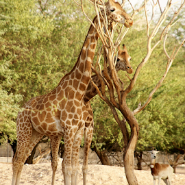 by Aroon  Kalandy - Animals Other Mammals
