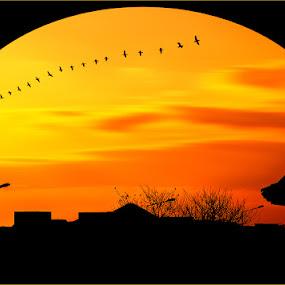 Sunset by Nayyer Reza - Landscapes Sunsets & Sunrises ( flock of birds, colour, clouds, orange, pakistan, silhouette, sunset, moving clouds, yellow, nayyer, birds, reza, color, colors, landscape, portrait, object, filter forge,  )