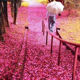 Flower Stairs by Susyanto Rasmana - City,  Street & Park  City Parks ( fall season, city forest, flower fall, city park, stairs street )