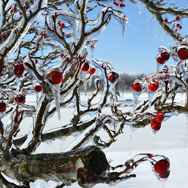 Frozen Beauty by Larry Bidwell - Nature Up Close Trees & Bushes
