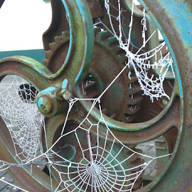 by Ciara McKeever - Nature Up Close Webs