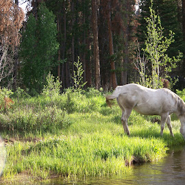 morning at grand lake, co by Ilona Williams - Animals Horses