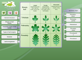 Screenshot of Biology - Plant Morphology