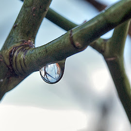 Water droplet by Zoot The-Tog - Nature Up Close Natural Waterdrops ( water, nature, droplet, drop, twig )