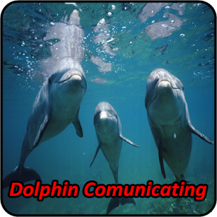 Dolphin Soundboards - screenshot